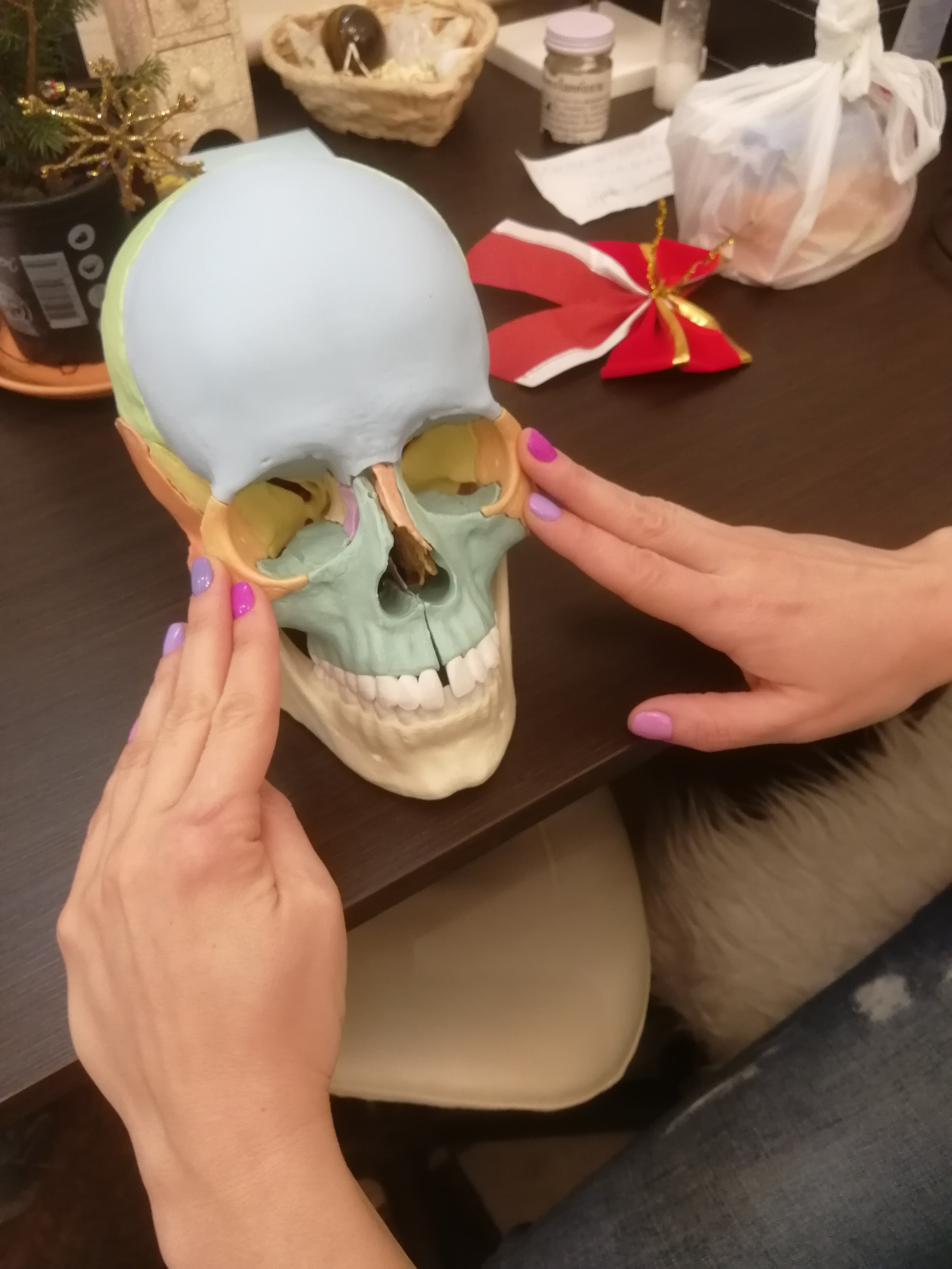 Муляж черепа