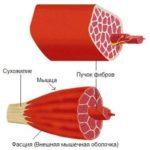 Перцептивный миофасциальный массаж